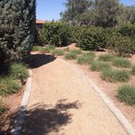 Walkway by gardens
