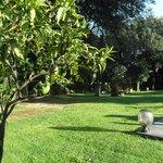un cote du parc avec de baux arbres et fleurs