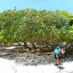 Flamingo beach on I the island of Culebra