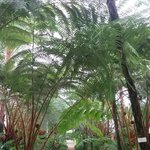 Palm Trees Section