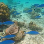 Snorkling with turtles on the house reef