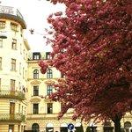 Вся улица цвела! Отель стоял в окружении розовых деревьев