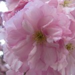 Close look at spring