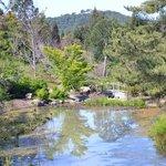 Lovely pond in Quarry Hill Garden