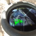 Holograms can be viewed in the garden area