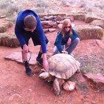 Kobae the Security Tortoise