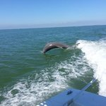 dolphins galore