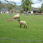 Neighbours are sheep!  Their job is to eat grass and look cute...  And probably grow wool.