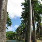 Many different varieties of palm trees