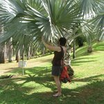 Checking out the palm leaves - be prepared to walk if you want - it's a beautiful place to explo