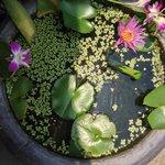 Cadre verdoyant avec des plantes