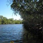 Weyba Creek Kayak Tour