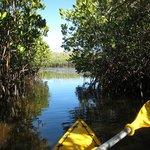Lake Weyba Kayak Tour