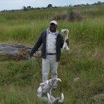 Rams with hippo bones