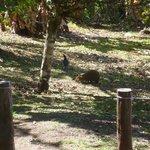 algunos de los animales que vimos.