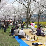Sakura Hanami between Hida and Takayama