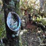 Muscheln weisen den Weg durch den dichten Wald