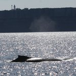 Whales on the bay