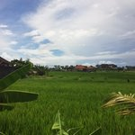 Surrounded by rice paddies
