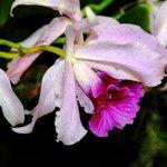 Una de las pocas flores naturales...