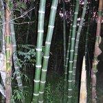 Bambus-Wald im Rumiwilco