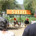 visitors enjoying the ostrich race #Safari Ostrich Farm
