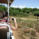 nice photo opportunity on the tractor drive #Safari Ostrich Farm