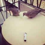 Tortore molto discrete che ti fanno compagnia sul balcone.