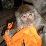 Monk Monkey