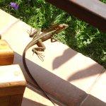 Geko sul porticato del bungalow