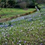 Spring in Alexandra Park