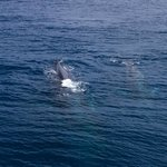 Mum & Baby Fin Whales