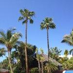 Desde las hamacas de la piscina entre palmeras.