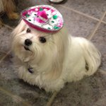 Mini sombrero's for the dogs too!