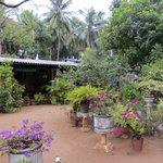 Nilmini Lodge et son jardin fleuri
