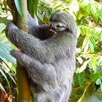 Sloth near our deck