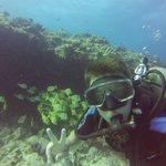 Reef Marina