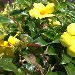 Front garden flowers.