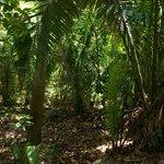 Trail at Nature Resort