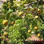 Limoni..... che bontà!!!