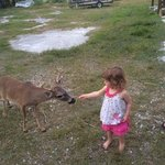 Come see the key deer!
