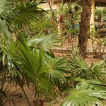 luscious bushes and palms around the property