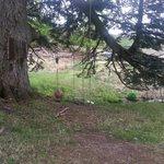 Tree swing- memories