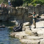 Seal show @ 3:30 pm