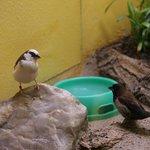 At the bird sanctuary