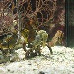 Sea horses @ the aquarium