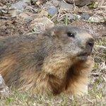 marmotte vue au cours de notre randonnée
