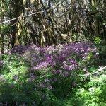 jolie forêt fleurie