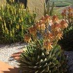 magically Mediterranean- stunning cacti