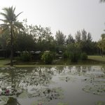 Ficus restaurant and the Lotus pond